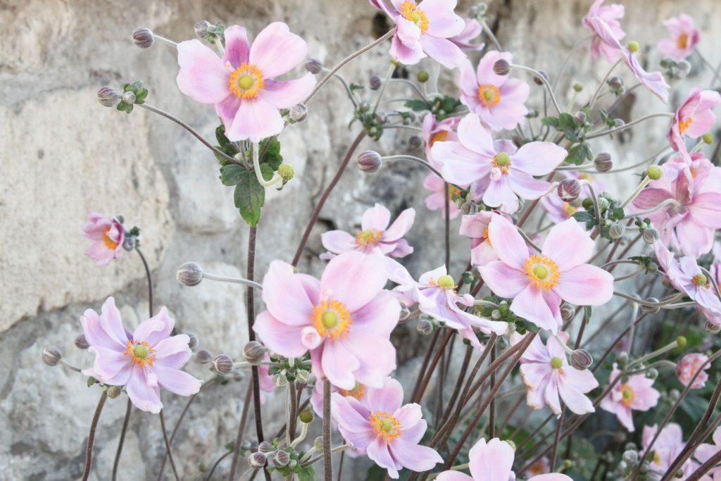 fleurs 3 lilas